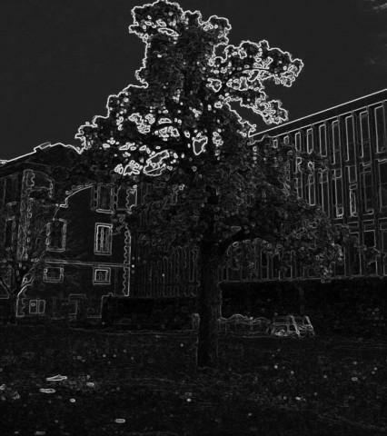 L'arbre sans fin